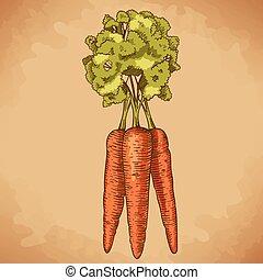 engraving illustration of carrot