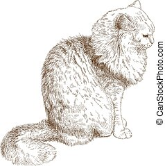 engraving illustration of cat - Vector antique engraving ...
