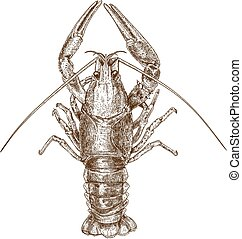 Engraving illustration of crayfish - Vector antique ...