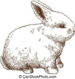 engraving illustration of fluffy bunny - Vector antique...