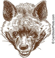 engraving illustration of hyena head - Vector antique ...