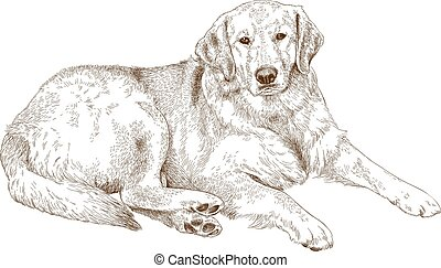 engraving illustration of labrador - Vector antique...