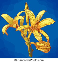 engraving illustration of lily in retro style