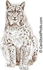 engraving illustration of lynx - Vector antique engraving...