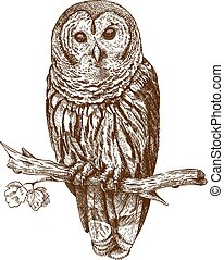 vector engraving antique illustration of owl on a brench isolated on white background