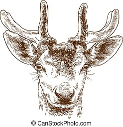engraving illustration of reindeer head - Vector antique...