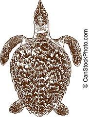 engraving illustration of sea turtle - Vector antique...