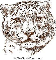 engraving illustration of snow leopard head
