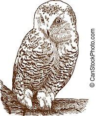 engraving illustration of snowy owl
