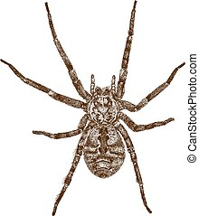 engraving illustration of spider - Vector engraving antique...