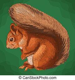 engraving  illustration of squirrel
