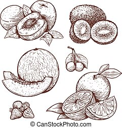 engraving illustration of sruits - vector set of engraving...