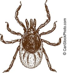 engraving illustration of tick - Vector engraving ...