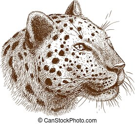 engraving leopard - engraving antique vector illustration of...