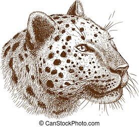 engraving leopard - engraving antique vector illustration of...