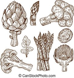 engraving of green vegetables - vector set of engraving...