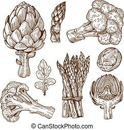 engraving of green vegetables - vector set of engraving...