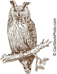 engraving owl - Vector antique engraving illustration of owl...