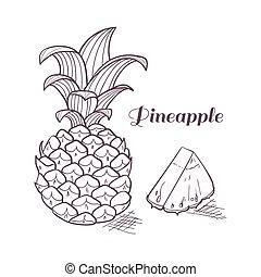 Engraving pineapple in vector