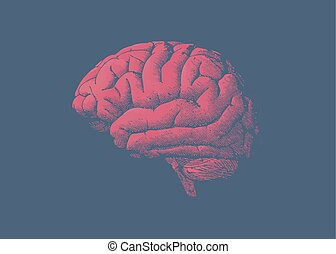 Engraving tint red brain on blue background