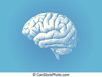 Engraving white brain on blue BG