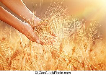 Enjoying golden wheat field