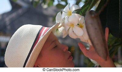 Enjoying the scent of flowering tropical trees.Plumeria -...