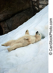 Enjoyment - Small polar bear cub having fun on a snow