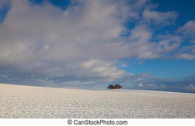enlige, ø, i, træer, ind, vinter