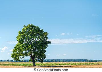 enlige, solfyldt, træ, felt, grønne, dag