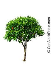 enlige, træ, afsondre