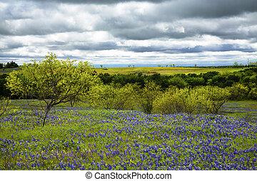 ennis, nublado, campo, cielos, debajo, bluebonnet, tejas