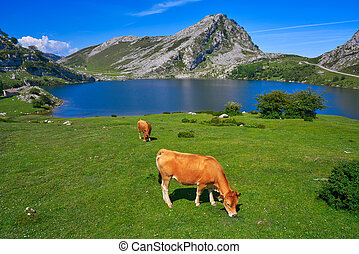 Enol lake at Picos de Europa in Asturias Spain - Enol lake...