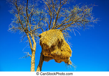 enorme, colônia, de, pássaros tecelão