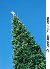 enorme, topo, árvore, natal