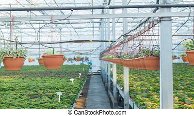 Enormous professional greenhouse in daylight. - Tremendous...