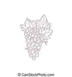 enredadera de uva, mano, dibujado, realista, bosquejo