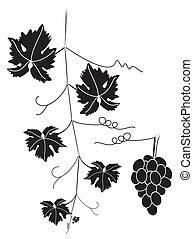 enredadera de uva, y, grupo, de, uvas