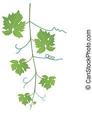 enredadera de uva, y, hojas