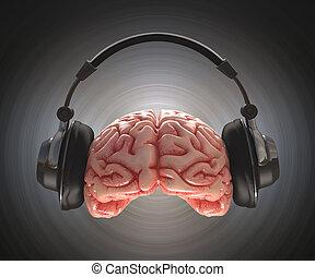 enregistrement, cerveau