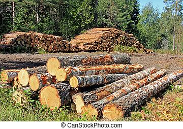 enregistrement, forêt, bois construction