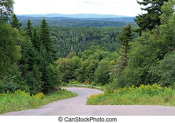 enrolamento, árvores, estrada