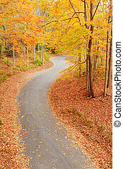 enroulement, ruelle, automne