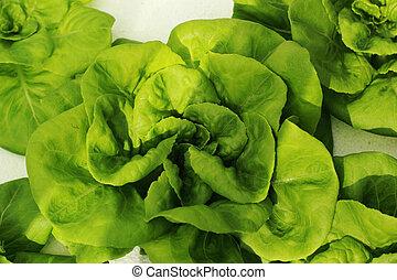 ensalada verde, vegetal, en, hydroponic, farm.
