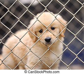 ensam, hund, in, bur