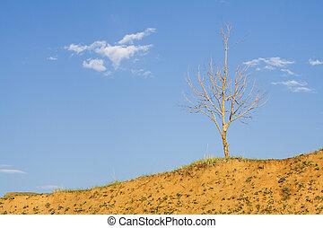 ensam, skallig, träd