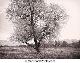 ensam, träd, äng