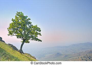 ensam, träd