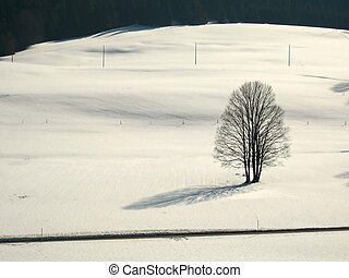ensam träd, fält, snöig