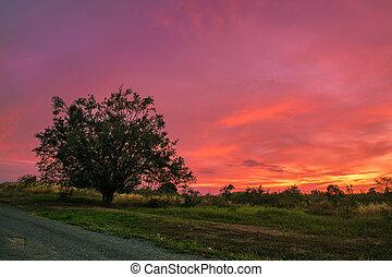 ensam, träd, med, vibrerande färg, solnedgång